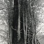 70×95cm